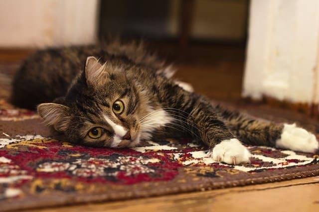 Manfaat karpet lantai