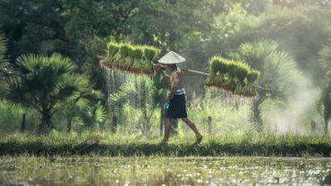 ide bisnis sektor pertanian