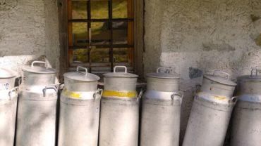 proses pembuatan keju