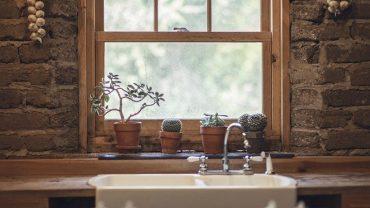 7 Usaha Agribisnis Rumahan Paling Menjanjikan - usaha