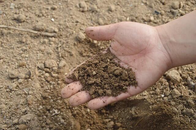7 Manfaat Pemupukan Untuk Tanaman dan Tanah - usaha